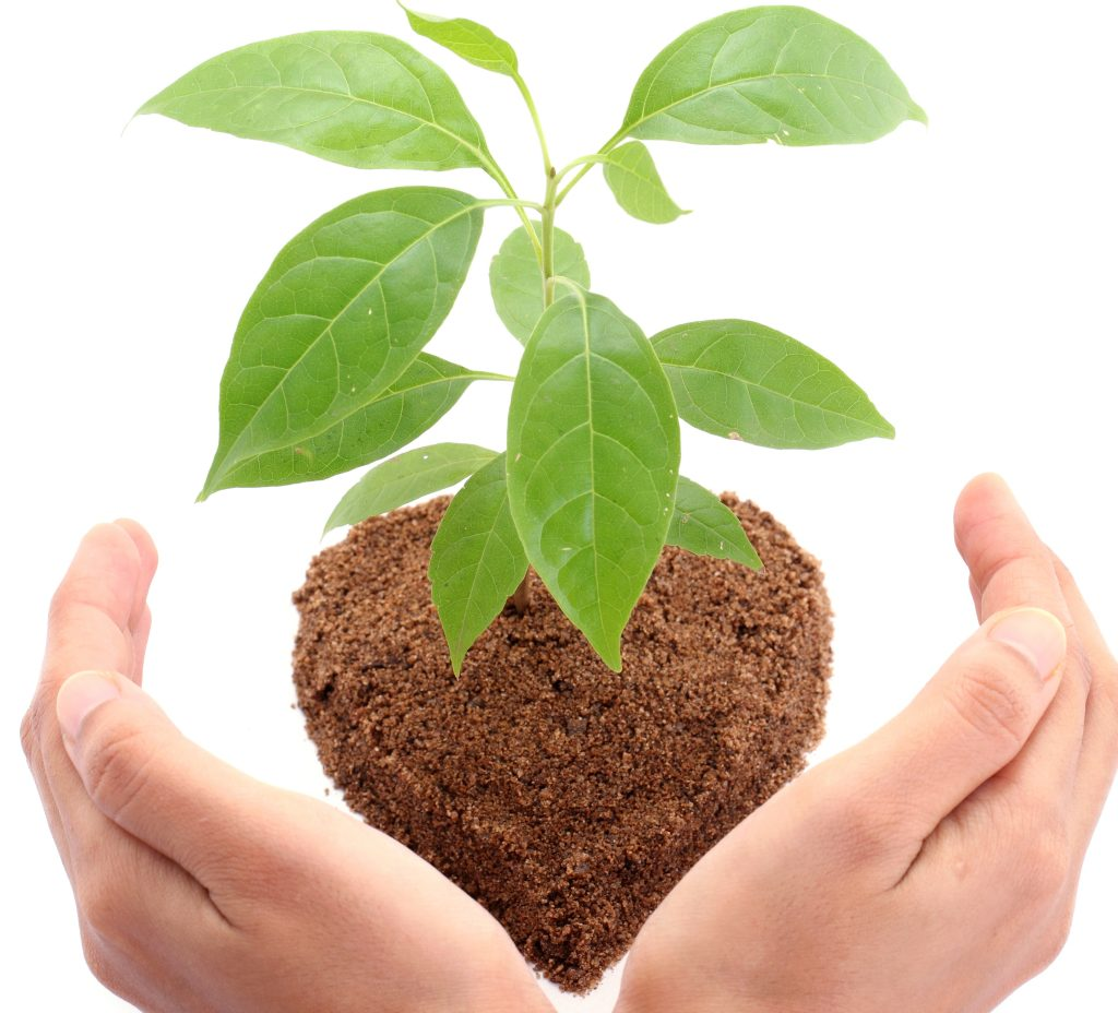 hands holding dirt with new plant